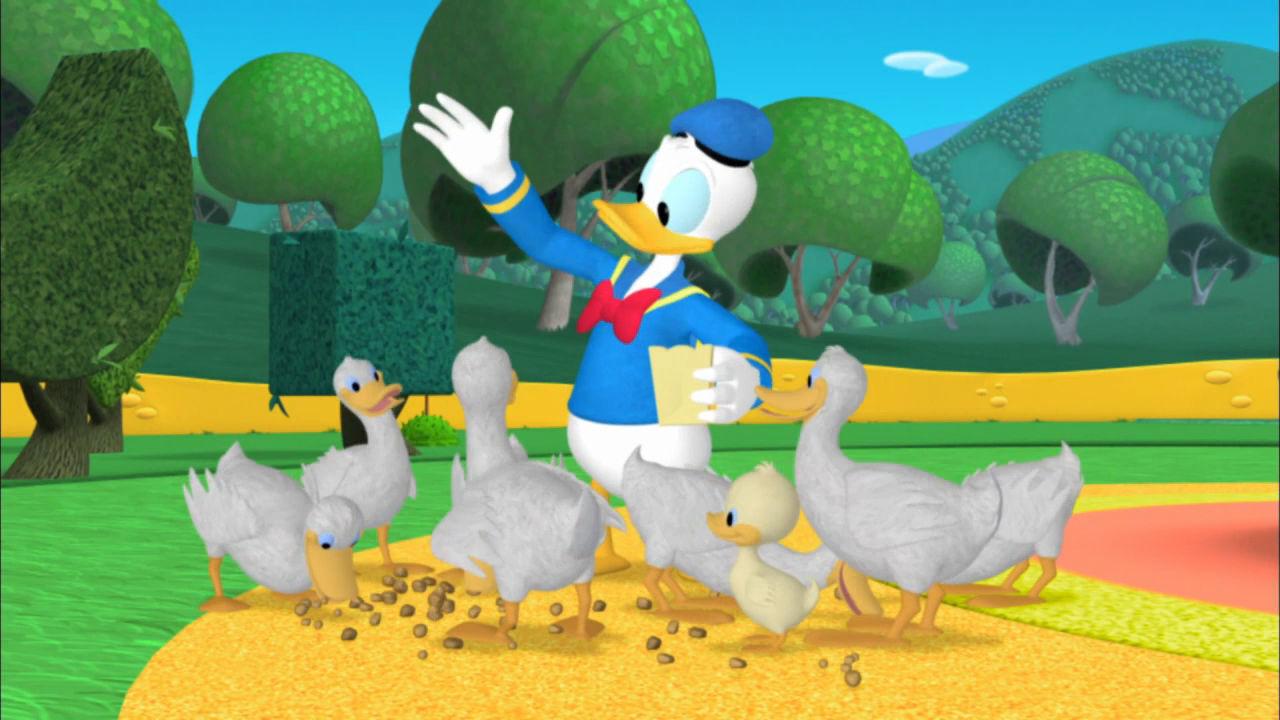 Kaczki Donalda