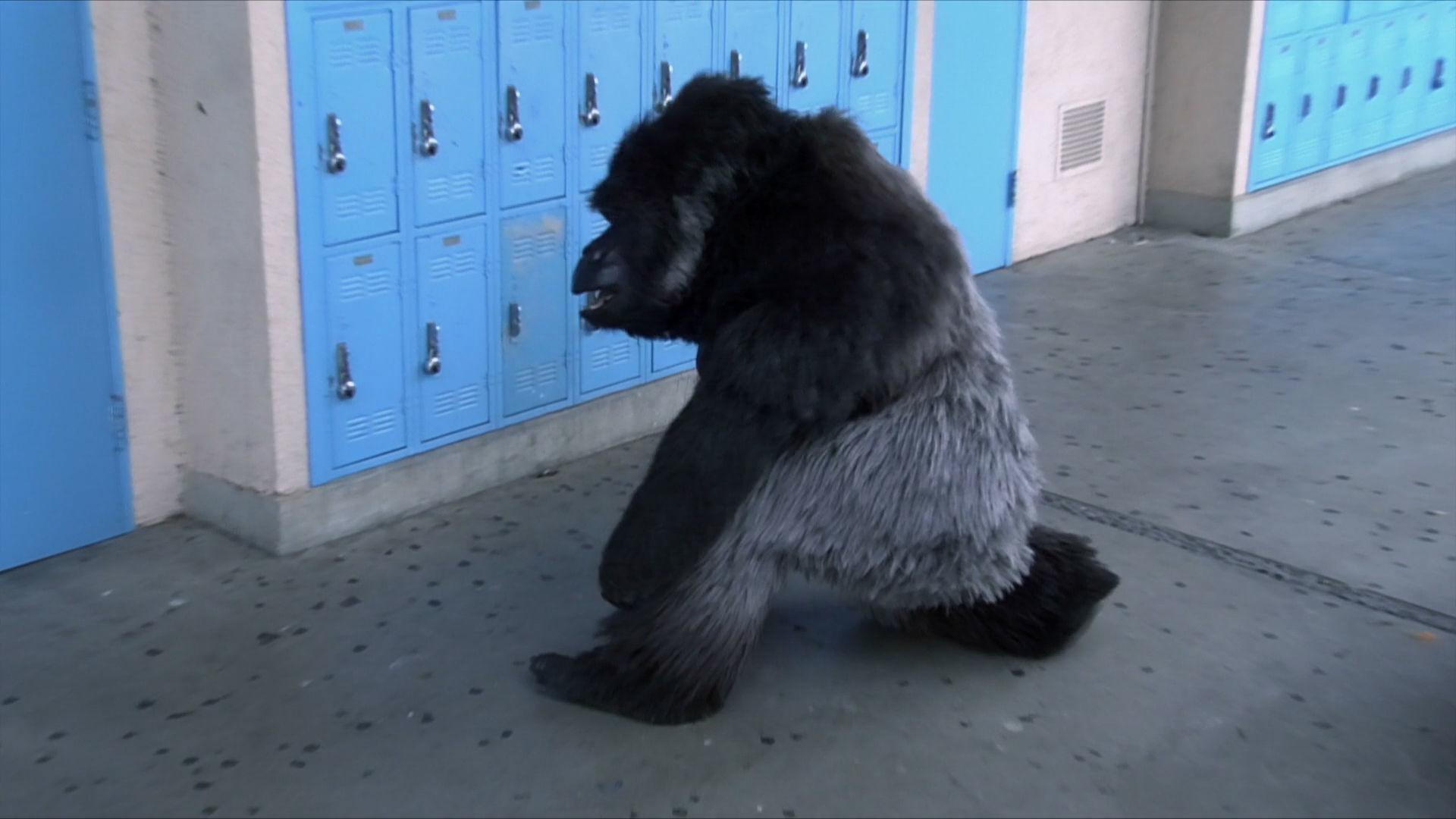 School Gorilla