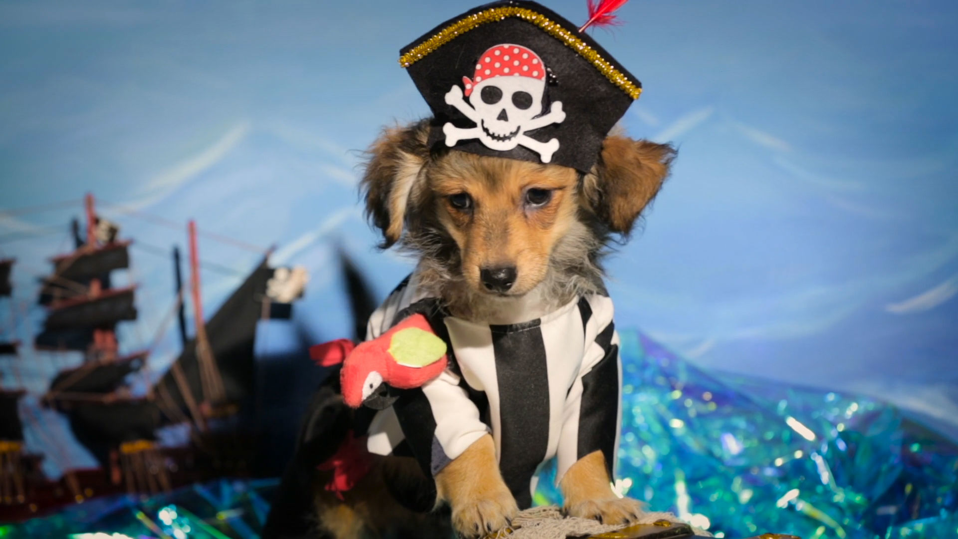 Pirate Puppy Pet Costumes
