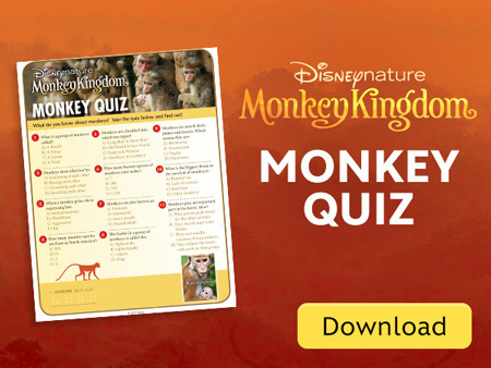 MK Monkey Quiz