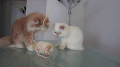 Two Kitties and a Ball of Yarn