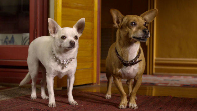 Beverly Hills Chihuahua 2 Trailer