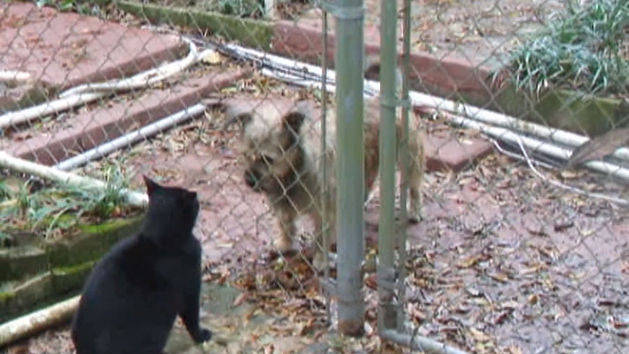 The Great Dog and Cat Fence Battle