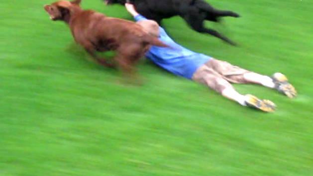 Extreme Dog Sliding