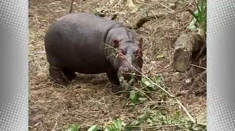 The Hippo and the Tortoise