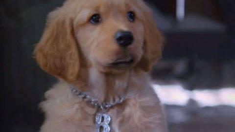 BDawg #4 - Puppy Clips