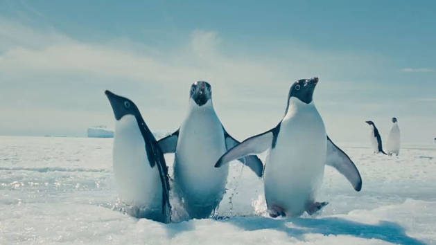 Swimming Penguins - Clip - Oceans