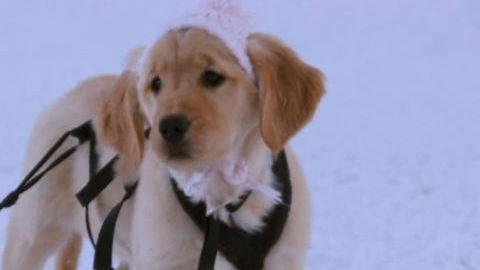 Rosebud #4 - Puppy Clips