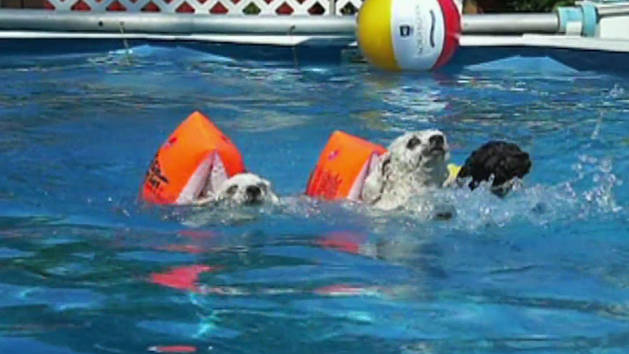 Puppy Pool Race