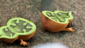 Monster Gourd - Clip - The Secret of the Magic Gourd