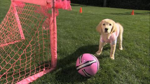 Clip - Rosebud Plays Soccer