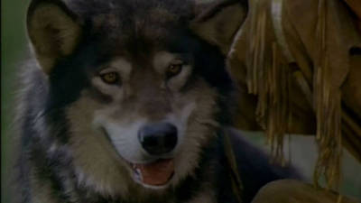 White Fang 2: Myth of the White Wolf Trailer