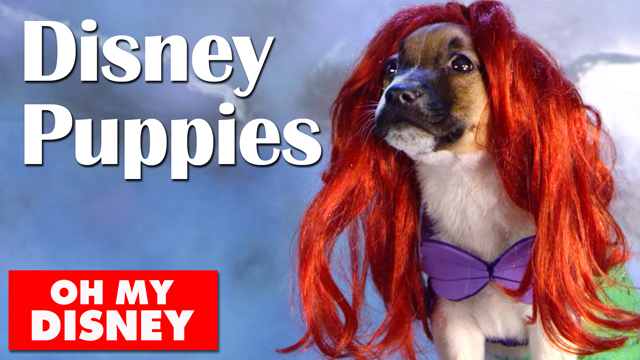 Adorable Disney Puppies in Slow Motion - Oh My Disney