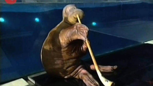 Walrus Toots His Own Horn!