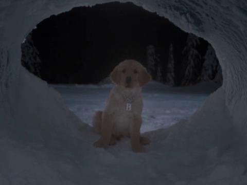 BDawg #3 - Puppy Clips