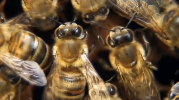 Beekeeping - Pass the Plate