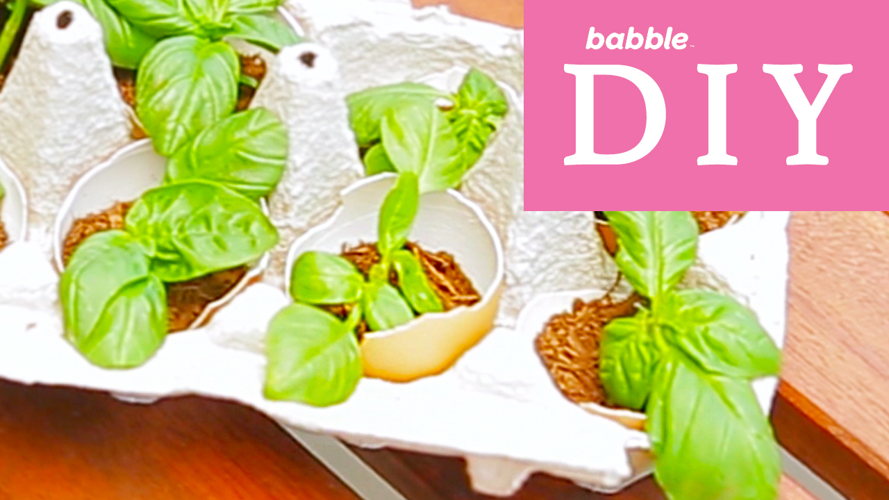 Eggshell Garden | Babble DIY