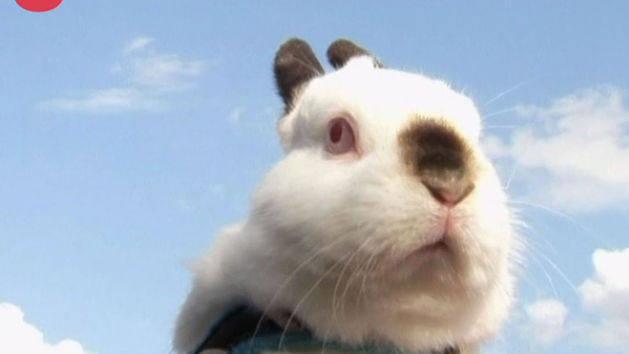 Bunnies Go Hopping Mad