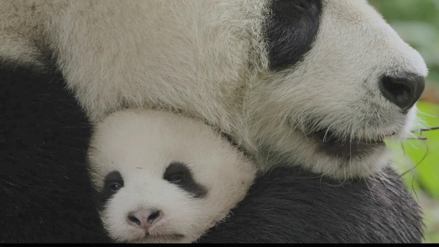 Born in China - Trailer