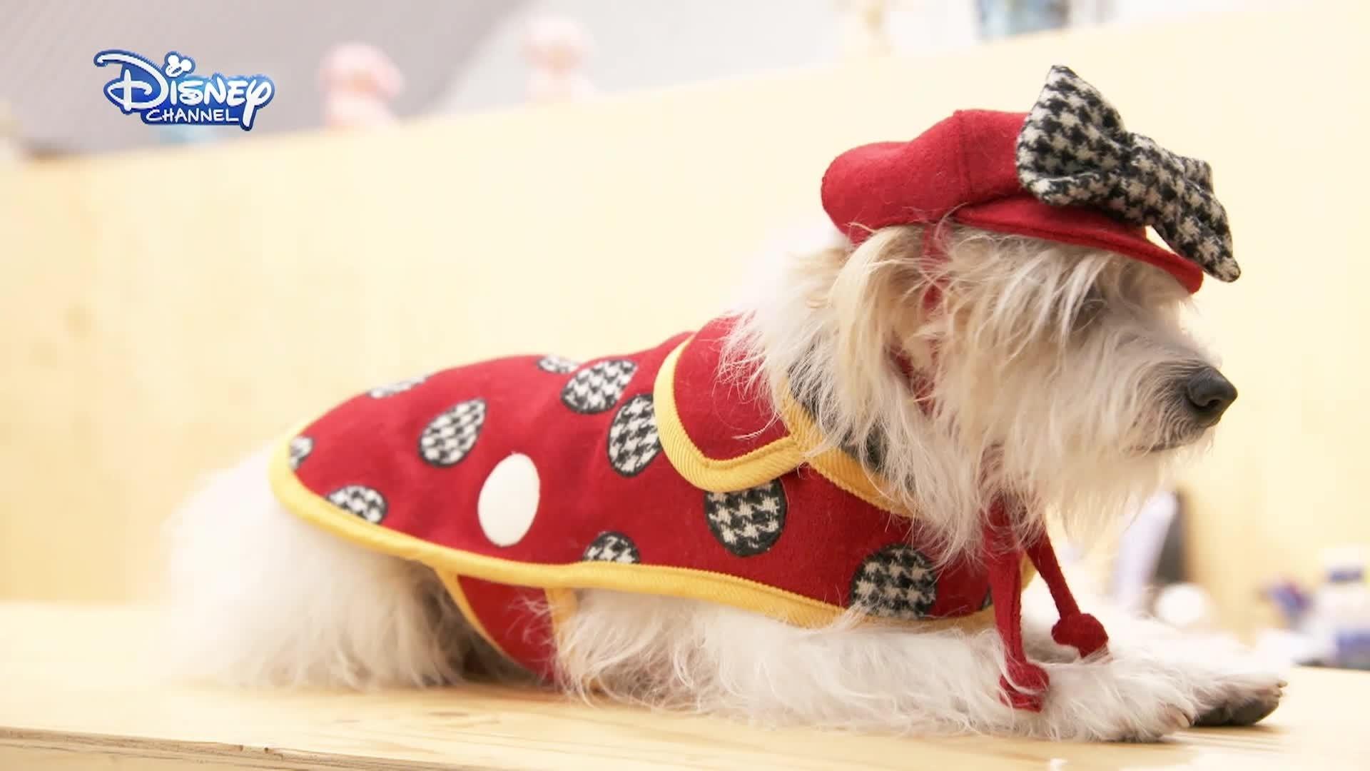 Minnie e a Moda - Estilista Para Cães