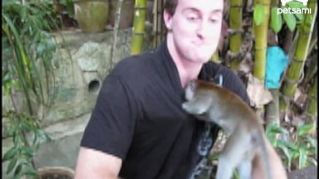 Monkey Hides in a Man's Shirt
