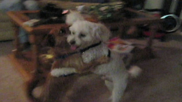 Doggy Tango