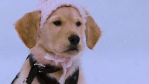 Rosebud #5 - Puppy Clips