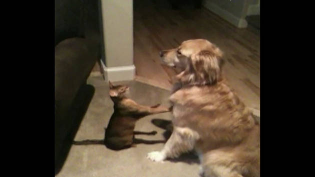 Cat Shows Dog Some Love