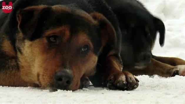 Sarajevo Residents Help Stray Dogs