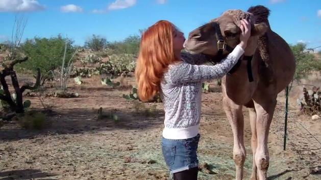 Camel Hugs and Kisses