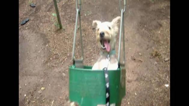 Dog on Kids Swing