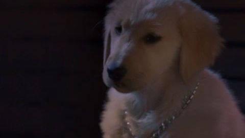 BDawg #5 - Puppy Clips