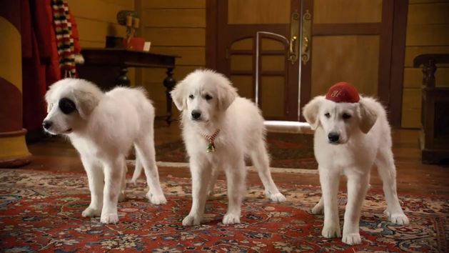 Santa Paws 2: The Santa Pups: Santa Pups Introduction