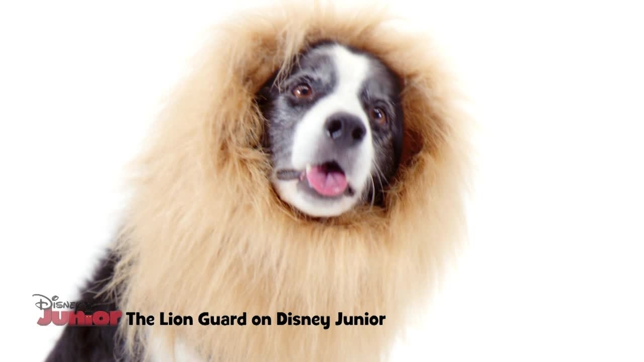 The Lion Guard Auditions