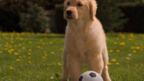 Rosebud #1 - Puppy Clips