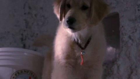 Buddha #3 - Puppy Clips