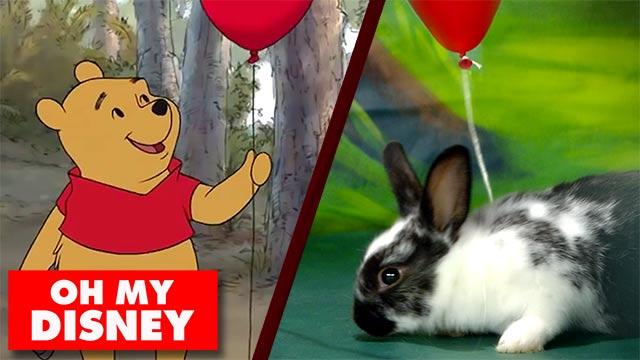 Disney Bunny Theater | Oh My Disney