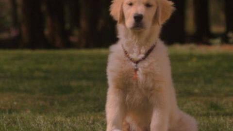 Buddha #2 - Puppy Clips
