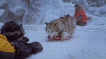 Eight Below DVD/Blu-Ray Trailer