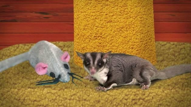 Fuzzy Tales: Detective Fuzzy Hubbard