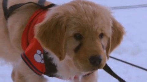 Budderball #4 - Puppy Clips