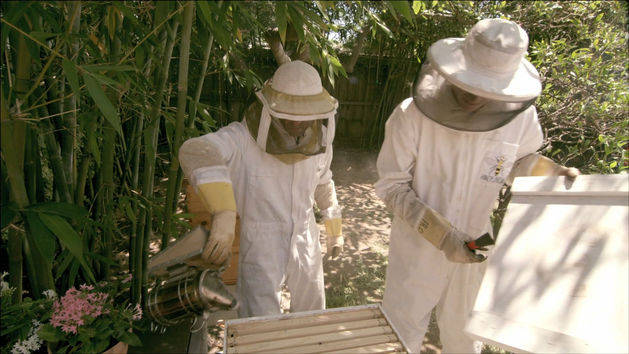 Pass the Plate: Urban Bee Keepers