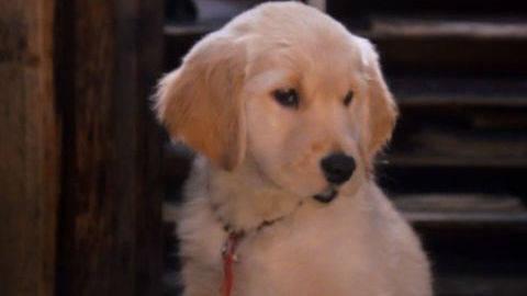 Buddha #5 - Puppy Clips