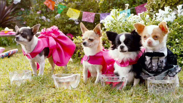 Beverly Hills Chihuahua 3: Sneak Peek with Raini Rodriguez