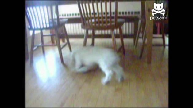 Dog Chasing Leash