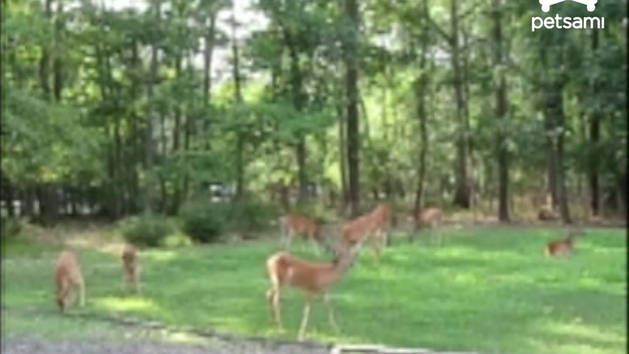 Deer vs. Sprinklers