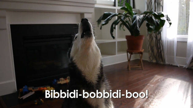Mishka's Bibbidi Bobiddi Bark