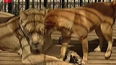 Dog and Lion are Roommates
