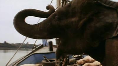 Operation Dumbo Drop Trailer