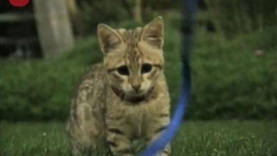 $22,000 Cat